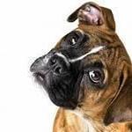 dog-150x150